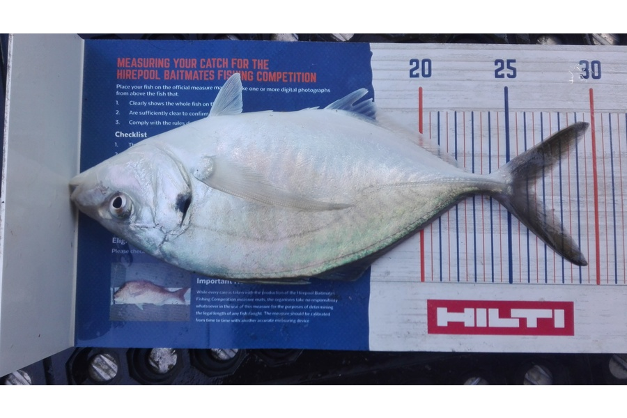 Marisa Andrews caught this 26.0cm Trevally at wellington harbour during The DB Export NZ Fishing Competition